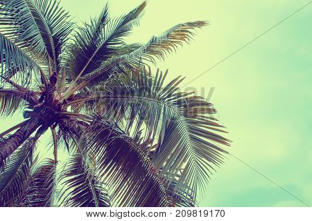 Plam Tree On The White Background (palm Tree Coconut)