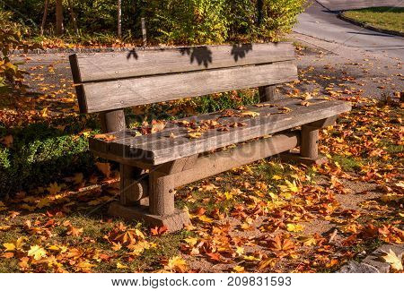 A bench in an autumn park. A wooden bench is strewn with yellow fallen leaves. Morning sun.