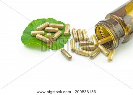 Green Asiatic Pennywort (Centella asiatica ) yellow pill capsules and bottle tablets on white background