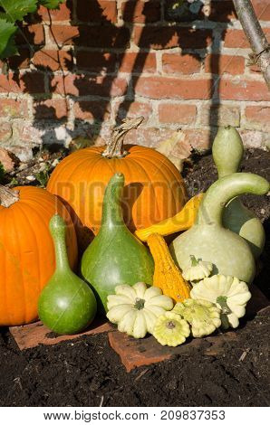 Pumpkins and Gourds on display outside in garden