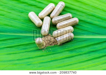 Herbal capsule and powder on green leaf background.