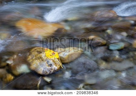 A leaf sits on a stone as water flows in a creek.
