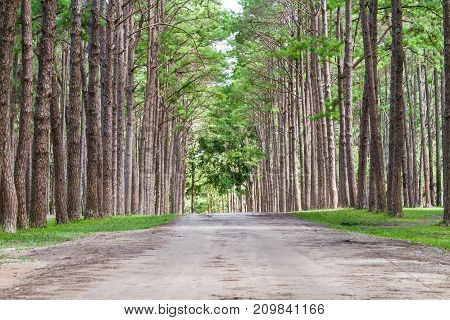 Green pine forest Forest Unseen Thailand name is Suan son bor Kaew or Pine Bokeo in Chiang Mai distric Thailand