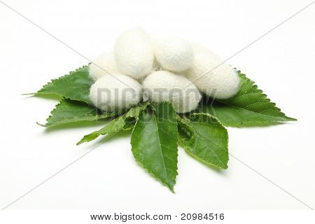 Silk cocoons on green mulberry leaf poster