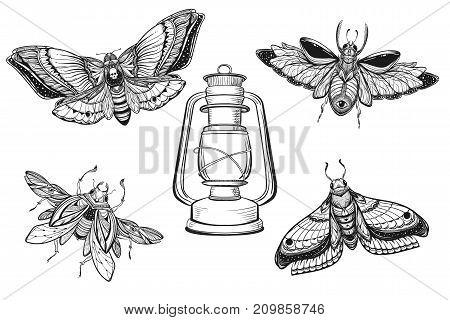 Beetle bug tattoo drawing set. Scarab bug illustration