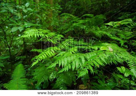 Plants in tropical green forest.