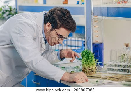 Biologist With Grass In Laboratory