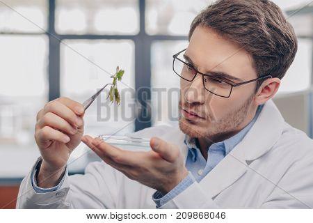 Biologist Looking At Plant In Tweezers