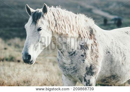 White Horse running Animal pasture grazing field landscape on background