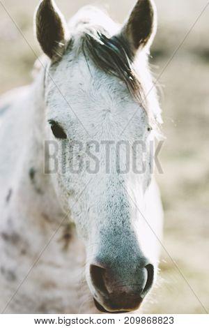 White Horse Animal portrait close up pasture