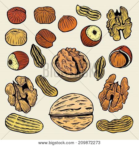 Great collection of highly detailed hand drawn nuts. Isolated Vector illustration