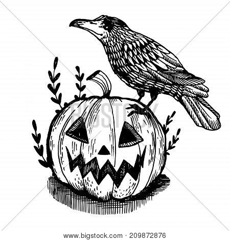 Crow bird and halloween pumpkin engraving vector illustration. Scratch board style imitation. Hand drawn image.
