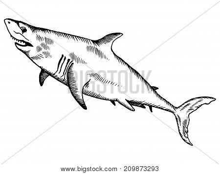 Shark ocean animal engraving vector illustration. Scratch board style imitation. Hand drawn image.