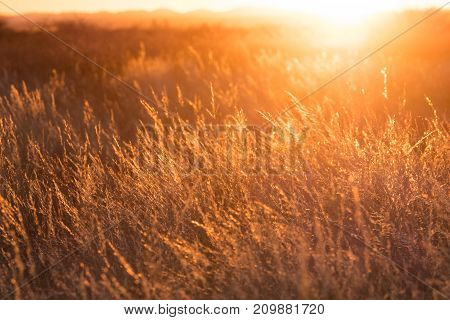 Close up image of a field during sunset in the karoo in South Africa