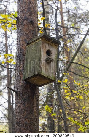 Wooden birdhouse on a pine tree. Autumn forest.