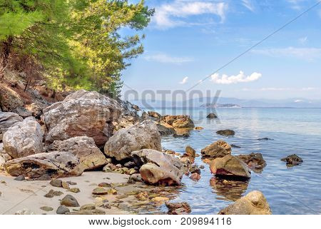 Natural background with green sea, tree and forest