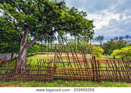 A large tropical tree behind a fence of bamboo branches on a farm. Rural Gili Trawangan, Indonesia.