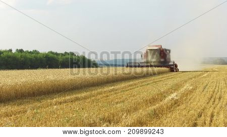 The combine harvests wheat. Agriculture harvesting combine harvester