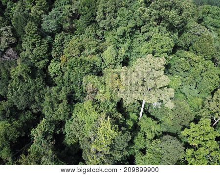 Rainforest canopy aerial photo