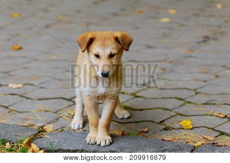 An abandoned homeless stray dog is standing in the street. Little sad abandoned dog on local road.