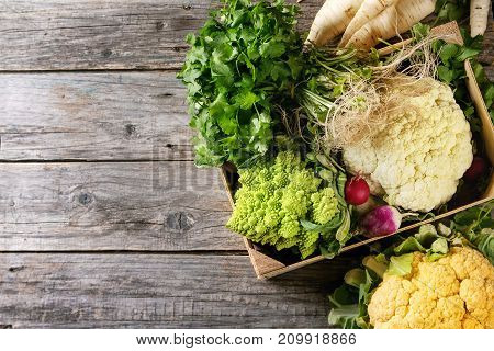 Variety of fresh raw organic colorful cauliflower, cabbage romanesco and radish with bundle of coriander in wood box over old wooden background. Top view with copy space. Food farm market concept