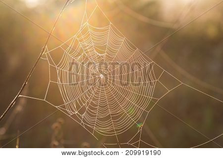 concentric spiderweb close-up in sunlight on the natural blurred golden background. autumn came