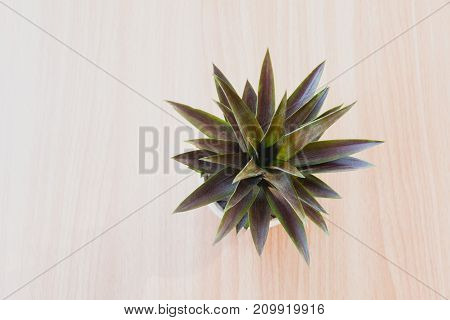 Top view green potted plant trees in the pot on wooden table background.