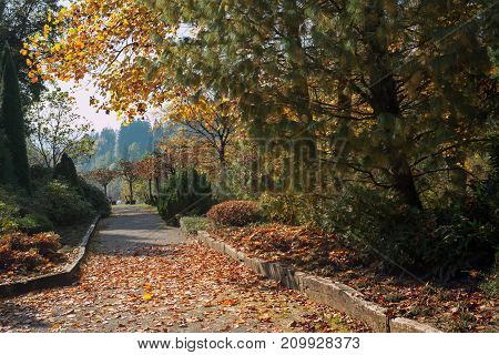 Autumn path strewn with leaves in the park.