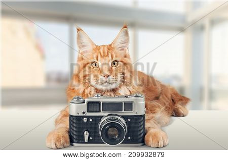 Red cat adorable camera color background small