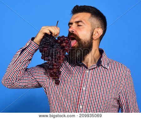 Man With Beard Enjoys His Bunch Of Grapes On Blue