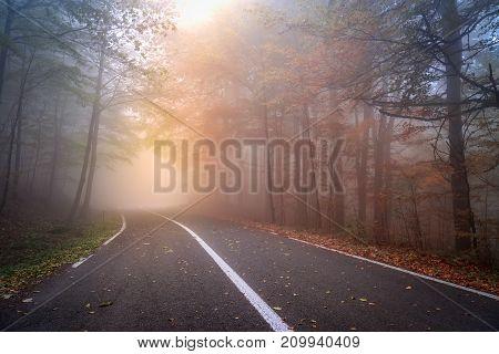 Asphalt road in a foggy autumn day.