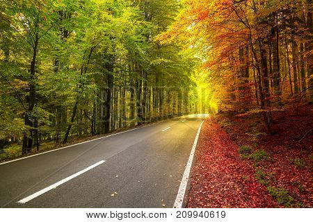 Autumn forest scenery with rays of warm light illuminating the gold foliage.concept of two seasons.