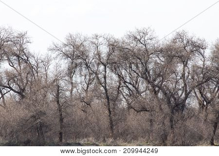 bare branches of a tree against the sky