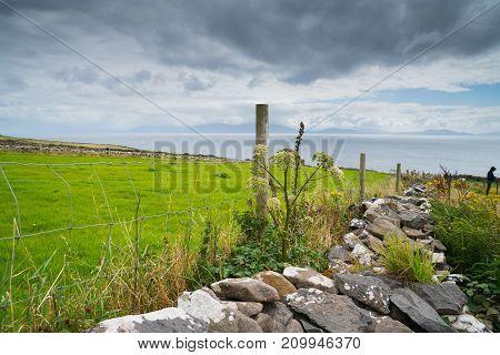 Coastal County Kerry along Wild Atlantic Way scenic tourist drive rock wall fences across green fields