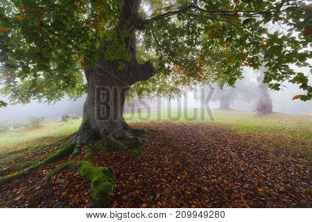 Autumn forest in a autumn foggy day
