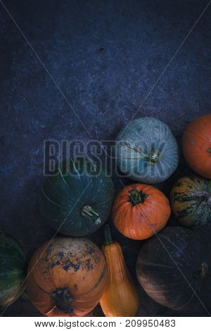 Autumn harvest of pumpkins still life of multi-colored
