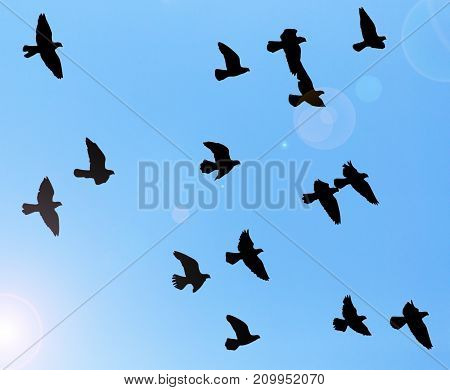 silhouette of a flock of pigeons on blue sky background