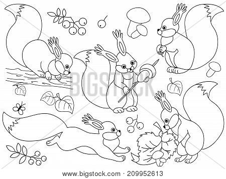 Vector set of black and white cute cartoon squirrels. Vector woodland squirrels, mushrooms, leaves, nuts and berries. Vector squirrels. Squirrels vector illustration