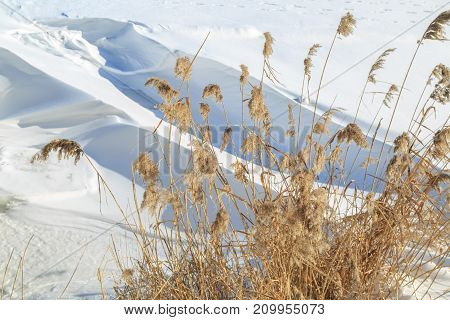 Dried reed on a background of large snowdrifts on a sunny winter day
