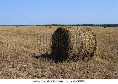 Dry hay bales in the field sunny summer day