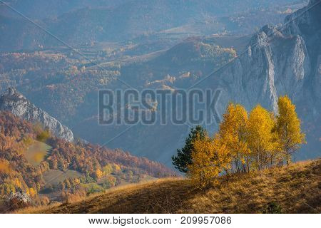 Mountain Autumn Landscape With Yellow Birch Trees