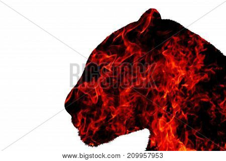 panther from the fire on a white background , fire, wildlife predators