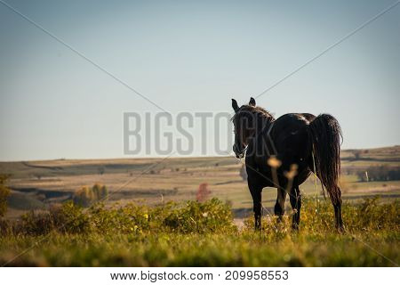 Grazing Horse On Mountain Pasture