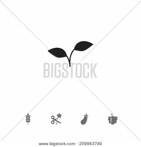 Set Of 5 Editable Agriculture Icons. Includes Symbols Such As Aubergine, Trimming, Frond And More