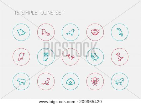 Set Of 15 Editable Zoology Outline Icons. Includes Symbols Such As Poulpe, Steed, Dogfish And More