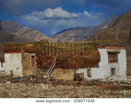 Autumn in a mountain: white houses stand among the yellow valley on the roofs lie large haystacks near the wall there is a cow October in the Himalayas.