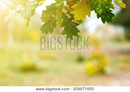Yellow green leaves on a blurred nature background autumn