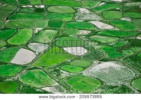 Green and white ovals of fields of barley and rice photographed from the height create an unusual pattern of fertile fertile land.