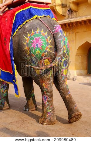 Painted Rear Of An Elephant Walking In Jaleb Chowk (main Courtyard) In Amber Fort, Rajasthan, India