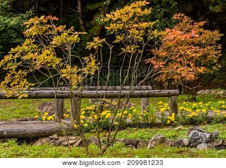 Landscape Of Small Tree With Fall Colored Leaves
